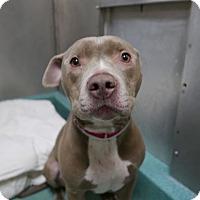 Adopt A Pet :: JETER - Ridgewood, NJ