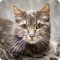 Adopt A Pet :: Beast - St Helena, CA