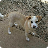 Adopt A Pet :: Nela - Irmo, SC