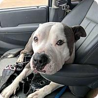 Adopt A Pet :: Boomer - Covington, TN