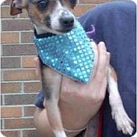 Adopt A Pet :: May - Pembroke Pines, FL