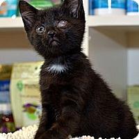 Adopt A Pet :: Cricket - Brooklyn, NY