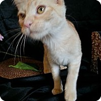 Adopt A Pet :: Rella - Clearfield, UT