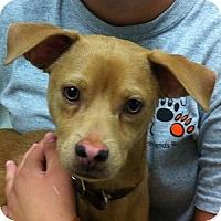 Adopt A Pet :: Tobias - Gilbert, AZ