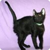 Adopt A Pet :: Hinkley - Powell, OH