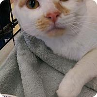 Adopt A Pet :: Rascal - Ogden, UT