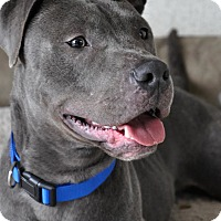 Adopt A Pet :: Tucker - Lodi, CA