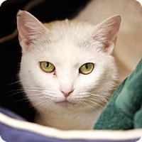 Adopt A Pet :: Betty White - Kettering, OH
