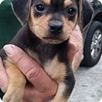Adopt A Pet :: Tuesday - Gainesville, FL