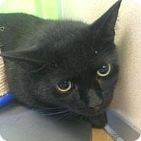 Adopt A Pet :: Obsidian - Hudson, NY