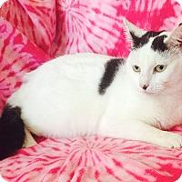 Adopt A Pet :: April Showers - Addison, IL
