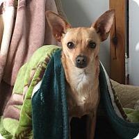 Adopt A Pet :: Jenna - Lancaster, KY