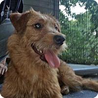Adopt A Pet :: Zaney - Rochester, NY