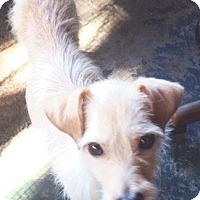 Adopt A Pet :: Rufus - St Petersburg, FL