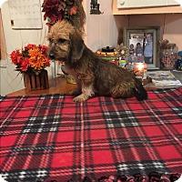 Adopt A Pet :: Abe - Glastonbury, CT