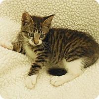 Adopt A Pet :: Tia - Burgaw, NC
