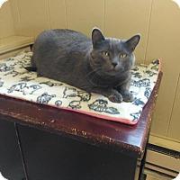 Adopt A Pet :: Hunter - Sauk Rapids, MN