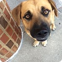 Adopt A Pet :: Boomer - Decatur, GA
