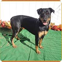 Adopt A Pet :: MAYA see also DIAMOND - Marietta, GA