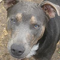 Adopt A Pet :: Trick - Harrisburgh, PA