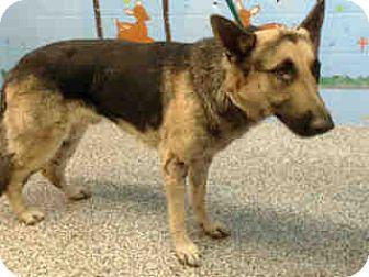 German Shepherd Dog Dog for adoption in San Bernardino, California - URGENT ON 11/1  San Bernardino