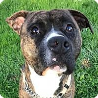 Adopt A Pet :: Brutus - Clackamas, OR