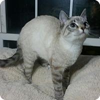 Adopt A Pet :: Harlow - Fairborn, OH