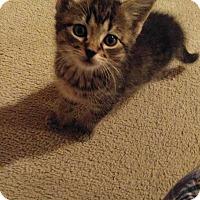 Adopt A Pet :: TROUBLE - Golsboro, NC