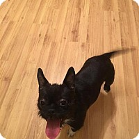 Adopt A Pet :: Olive - Chester, IL