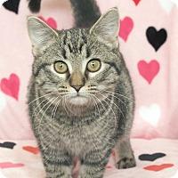 Adopt A Pet :: Bryson - St Louis, MO