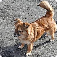 Adopt A Pet :: Dee - Tumwater, WA