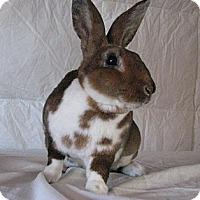 Adopt A Pet :: Sora - Watauga, TX