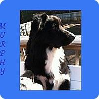 Adopt A Pet :: MURPHY - Dallas, NC