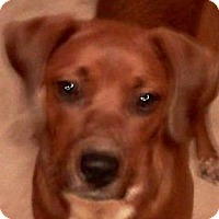 Adopt A Pet :: Tuti-Fruti - Hilham, TN