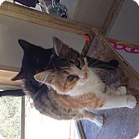 Adopt A Pet :: Zoey - Aiken, SC