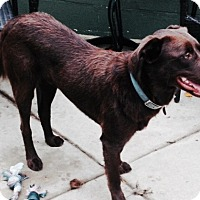 Adopt A Pet :: Leroy - Salem, MA