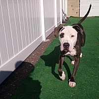 Adopt A Pet :: Petey - North Haledon, NJ