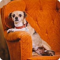 Adopt A Pet :: Patty - Portland, OR