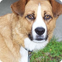 Adopt A Pet :: RANDY - Odessa, FL