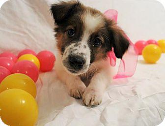 Small Dog Adoption Sydney