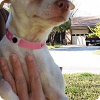 Adopt A Pet :: A364019 Marsy - San Antonio, TX