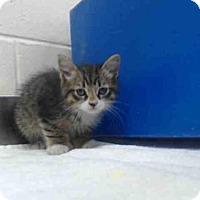 Adopt A Pet :: A340375 - Orlando, FL