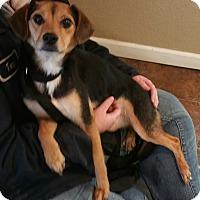 Adopt A Pet :: Sadie Woo - Lisbon, OH
