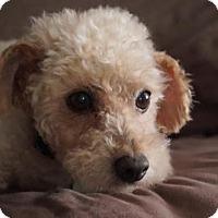 Adopt A Pet :: Oliver 3320 - Toronto, ON