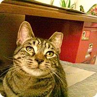 Adopt A Pet :: Paloma Roma - Phoenix, AZ