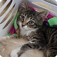 Adopt A Pet :: Finnick - Greenwood, SC