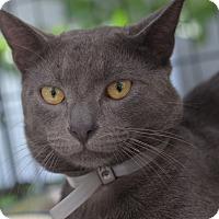 Adopt A Pet :: Flipper - Brooklyn, NY