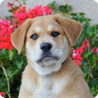 Adopt A Pet :: Ferdinand von Maysie - Thousand Oaks, CA