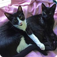 Adopt A Pet :: Ziggy & Suki - Novato, CA