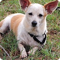 Adopt A Pet :: Charlie - Anderson, SC